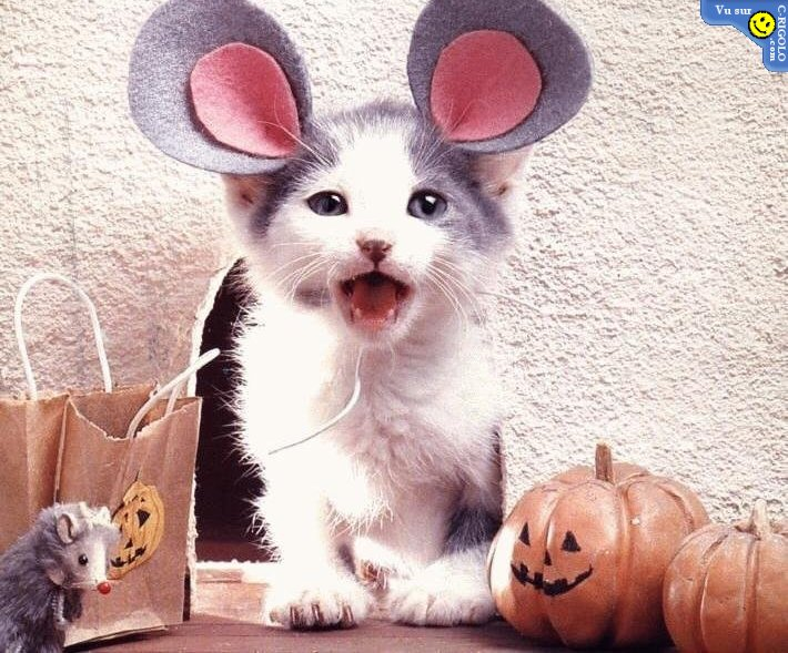 chat souris haloween