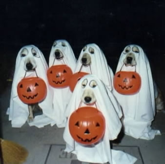 Photos a vos ordres - Page 6 Chiens-halloween-fantome