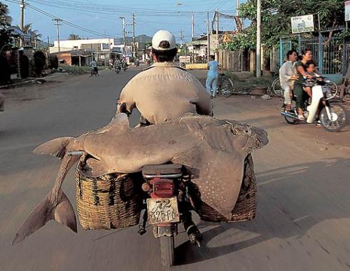 transport Moto-utile
