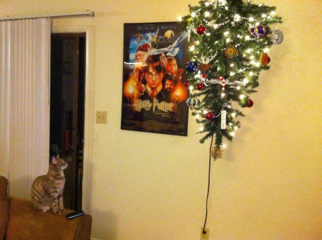 Les Chats Et Les Sapins De Noel