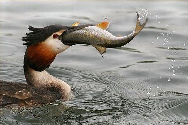 Les cordages pour la pêche sur la carpe par les mains