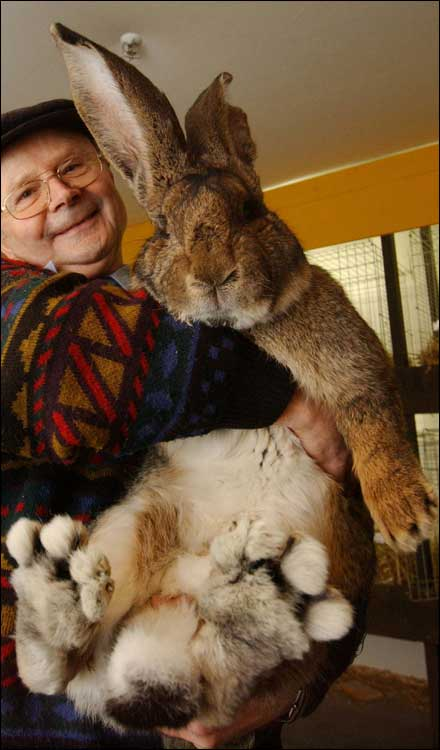 un lapin g�ant!