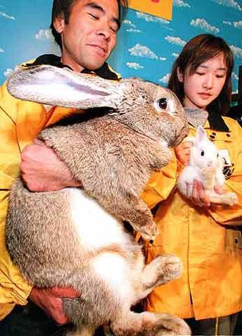 record du plus gros lapin!